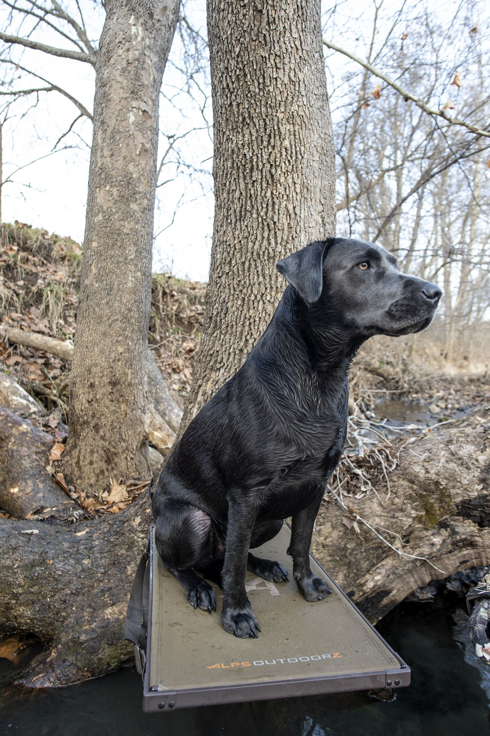Preparing Your Dog for Waterfowl Season