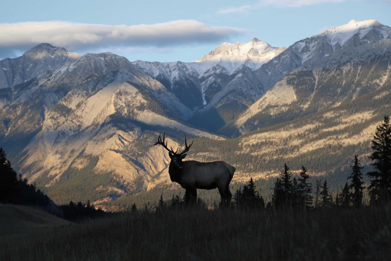 elk-hunting-gear